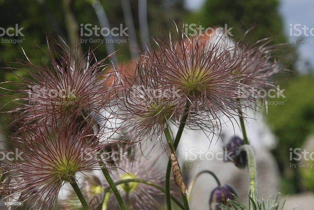 Fading flower stock photo