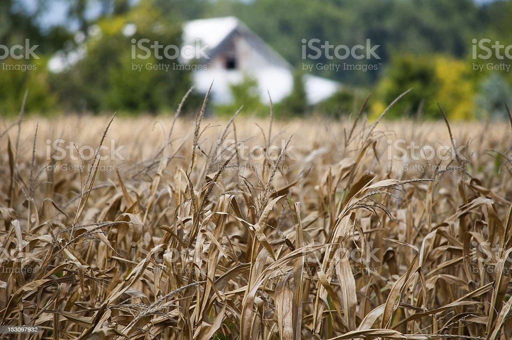 Failed Crop stock photo