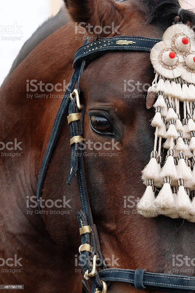 Fair de Sevilha. Cavalo close-up foto royalty-free