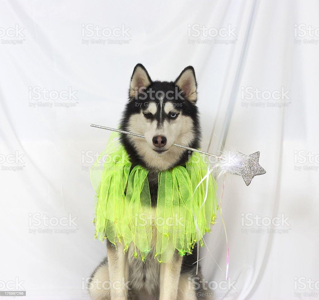 Fairy Dog stock photo