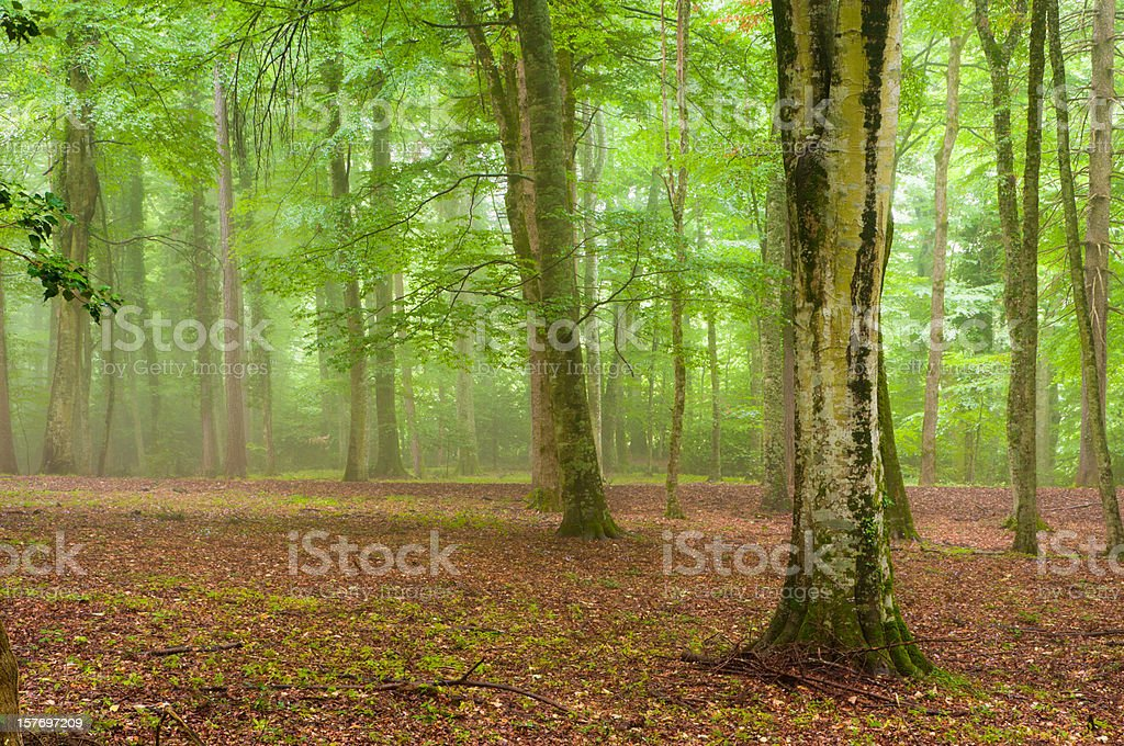 Fairy Forest royalty-free stock photo