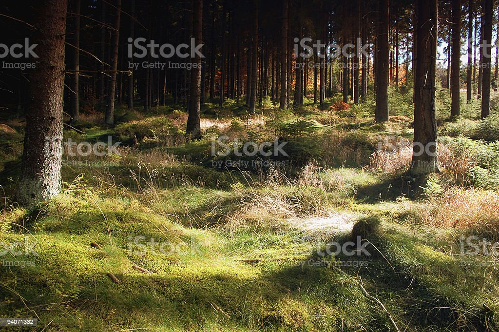 Fairy Forest stock photo