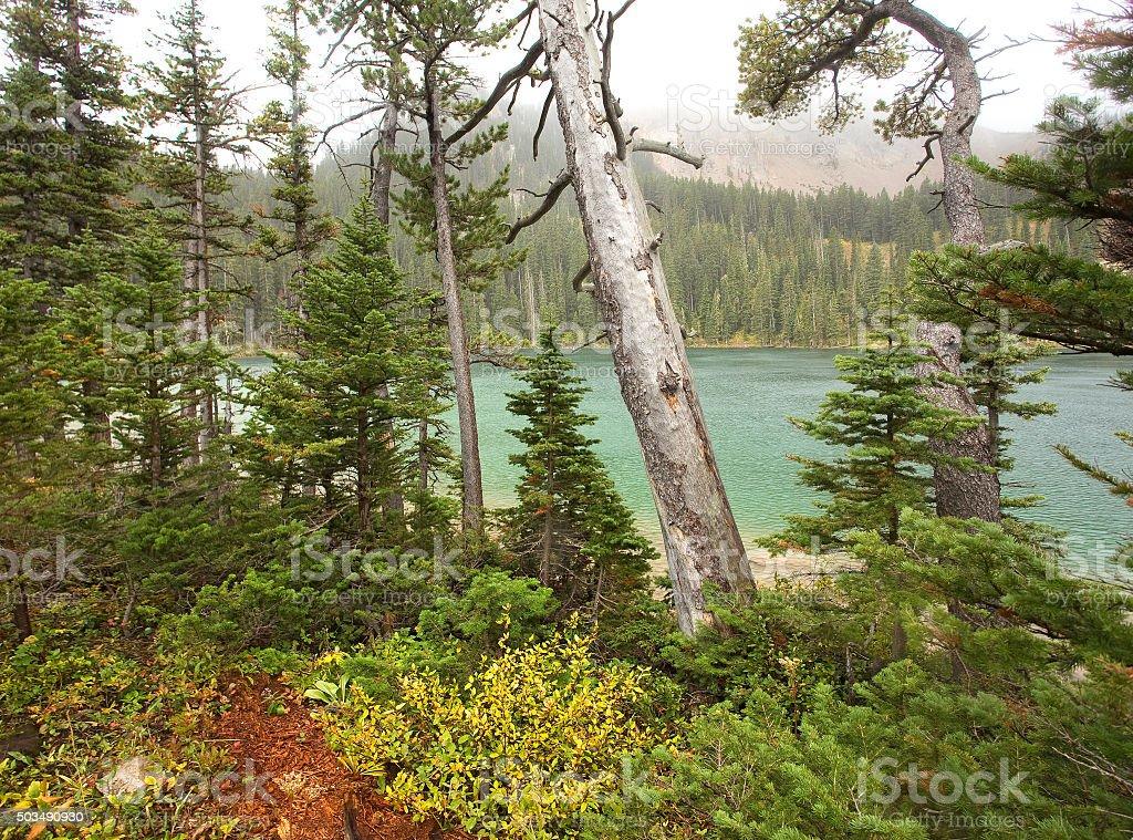 Fairy Lake Montana stock photo