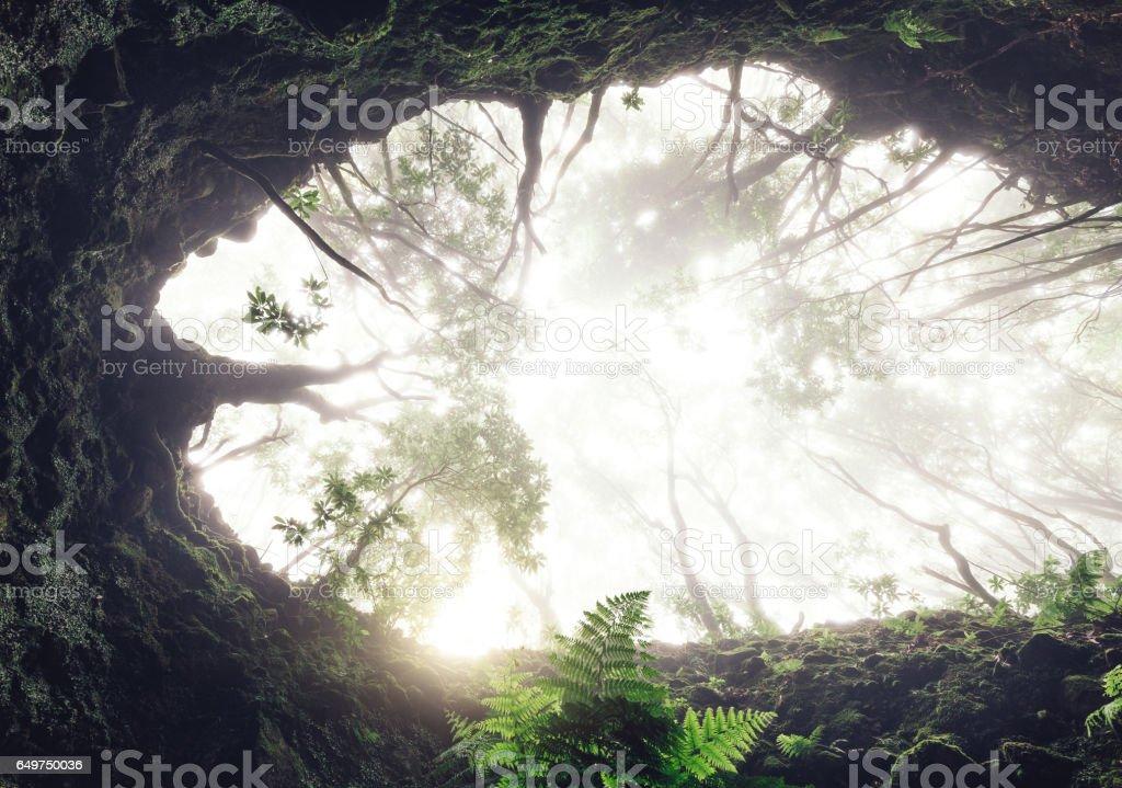Fairy Madeira Forest stock photo