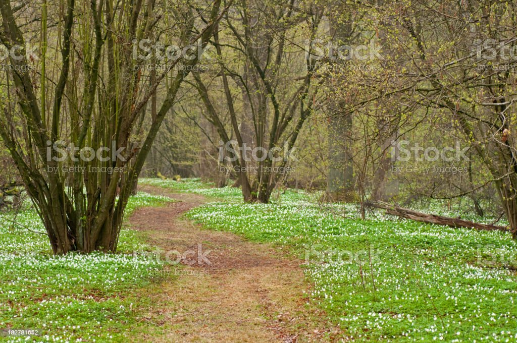 Fairy tale forest path royalty-free stock photo