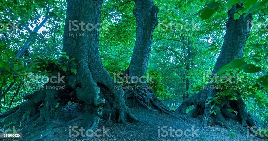 Fairy tale wood stock photo