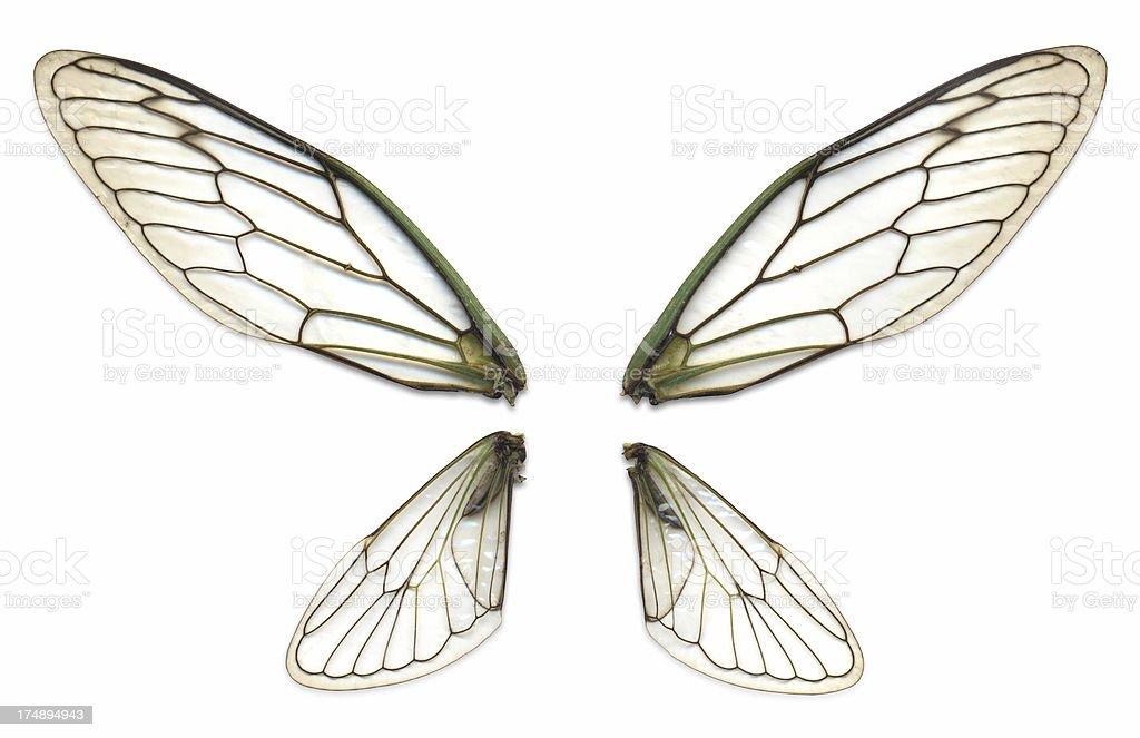 Fairy Wings stock photo