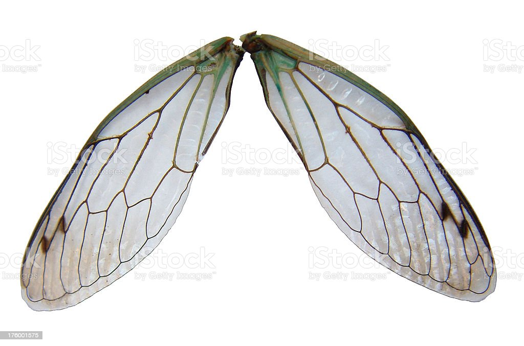 Fairy Wings royalty-free stock photo