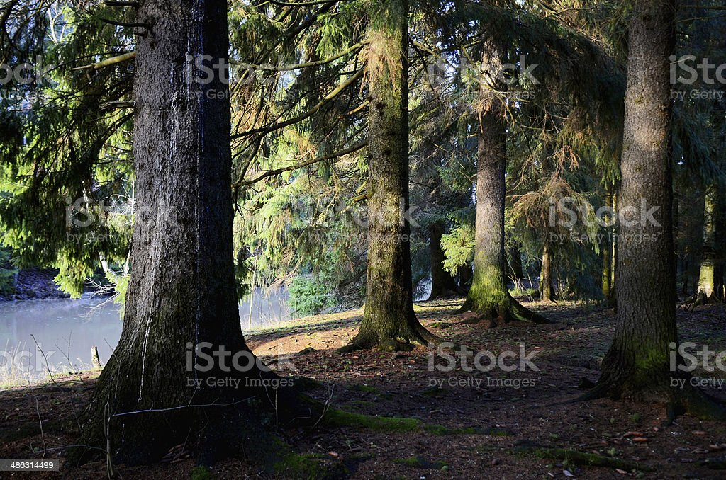 Fairytale forest at riverbank at morning sunlight stock photo