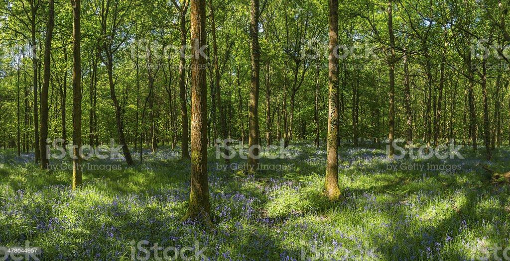 Fairytale forest ferns foliage vibrant wildflowers idyllic natural woodland panorama royalty-free stock photo