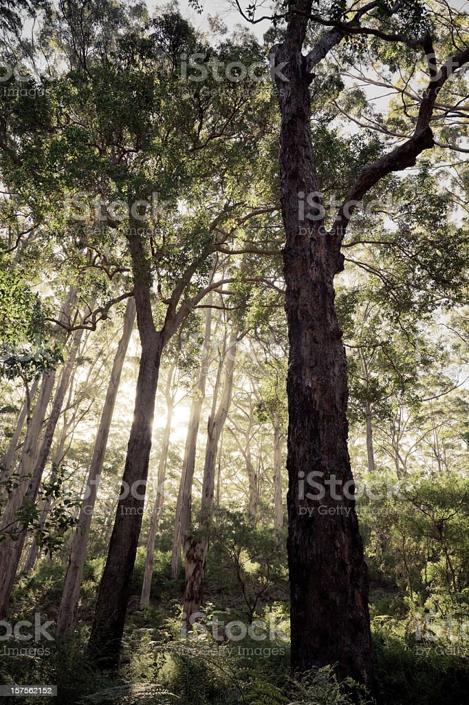 Fairy-Tale Forest stock photo