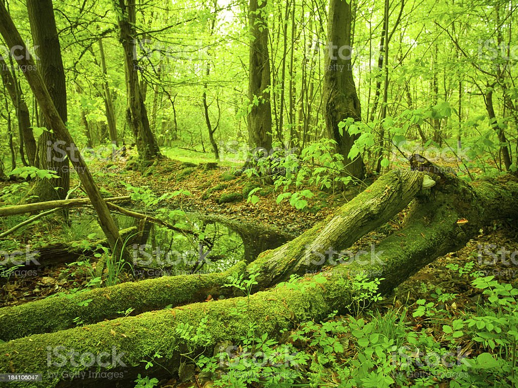 Fairytale Forest royalty-free stock photo