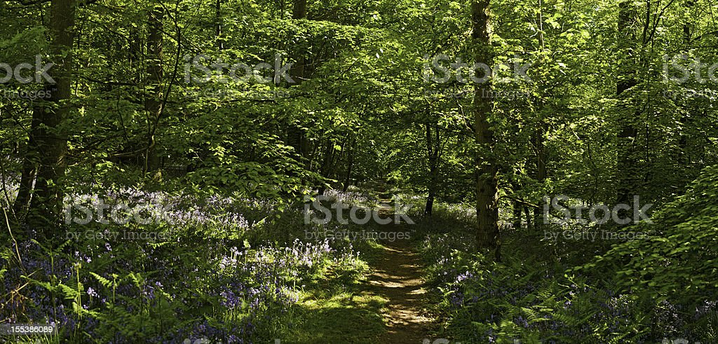 Fairytale forest trail through idyllic summer woodland royalty-free stock photo