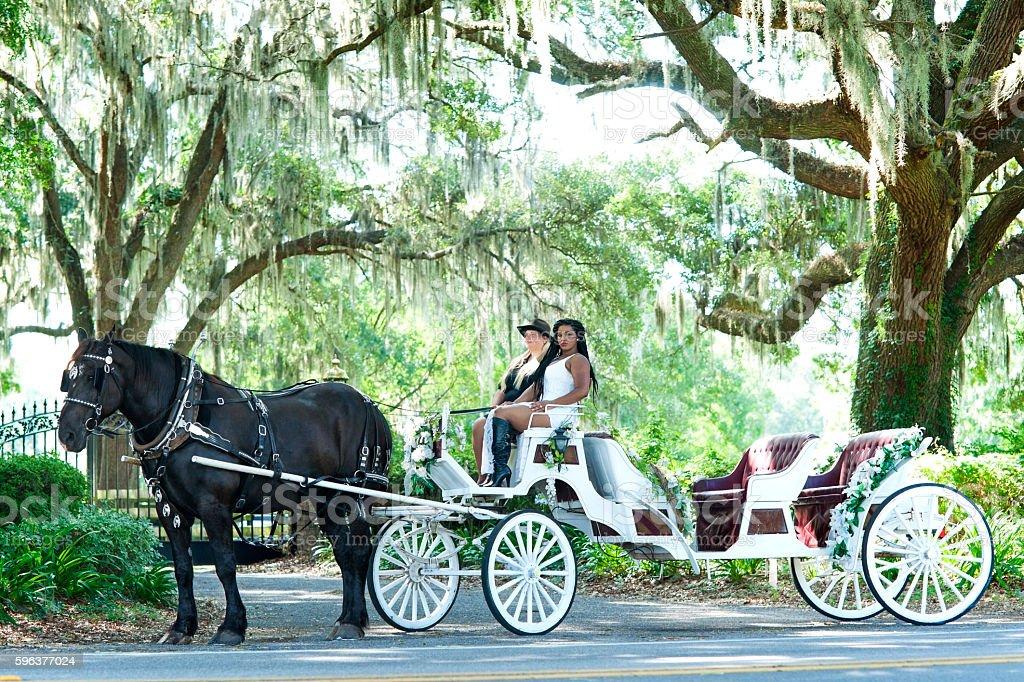 Fairytale horse carriage under live oaks stock photo