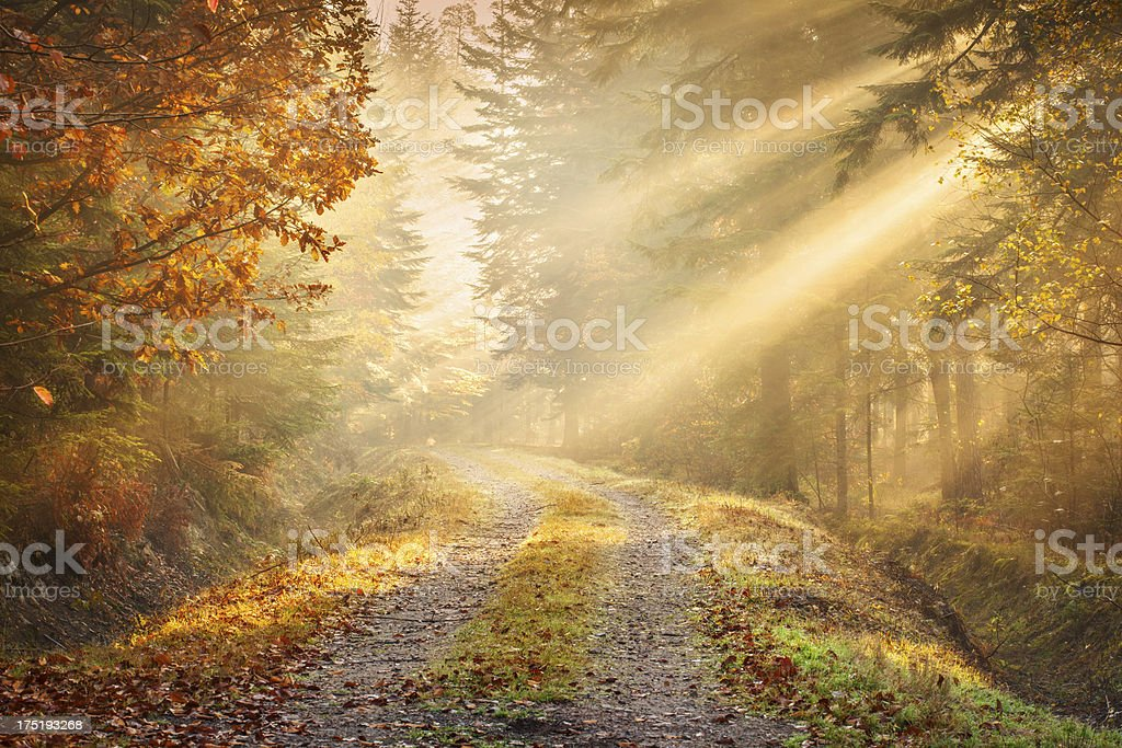 Fairytale Road winding through the Foggy Autumn Forest stock photo