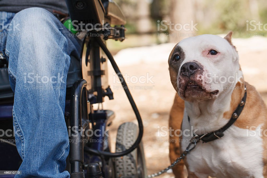 Faithful dog with his owner. stock photo