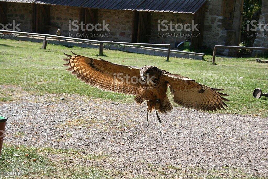 Falke im Anflug stock photo