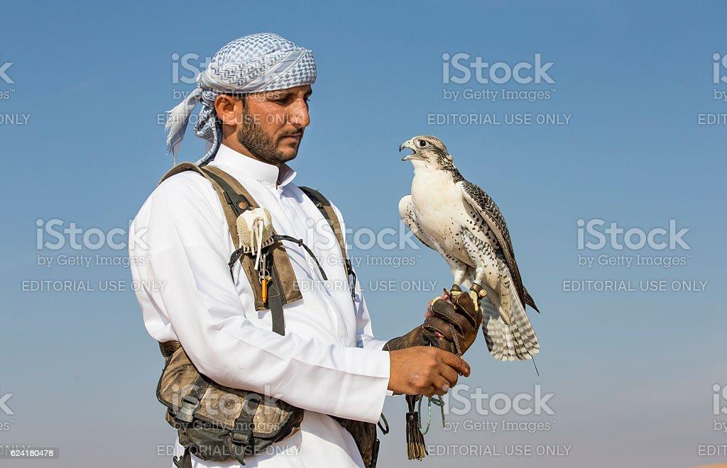 Falconer is training Peregrine Falcon in a desert near Dubai stock photo
