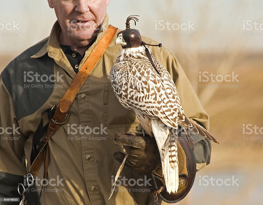 Falconer with His Hooded Bird stock photo