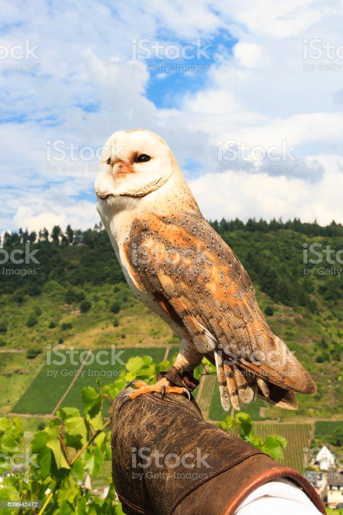 Falconry at Cochem Castle, Germany stock photo