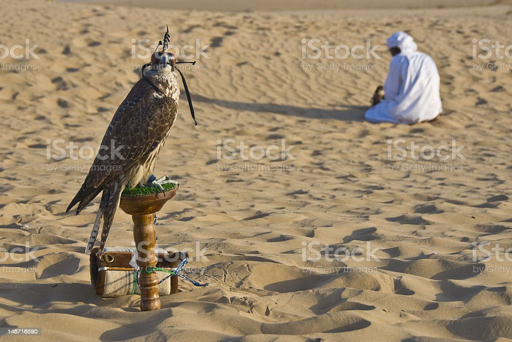 Falconry in desert stock photo