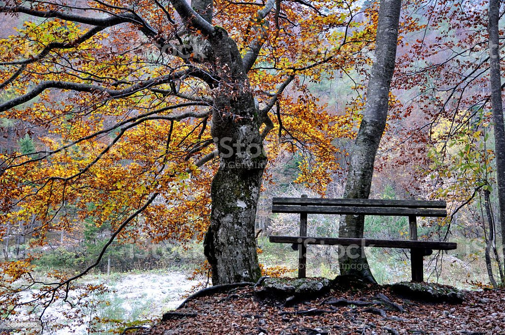 fall and an empty bench in forest stock photo