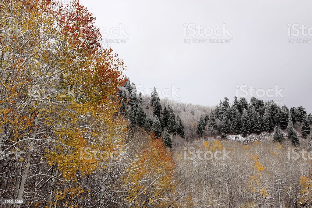 Fall and Winter Leaves royalty-free stock photo