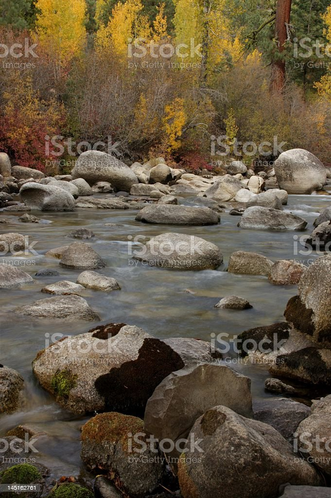 Fall Aspens royalty-free stock photo