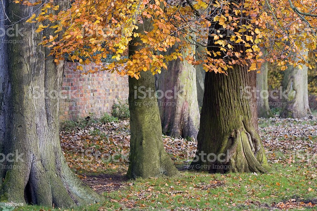 Fall / Autumn in England royalty-free stock photo