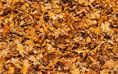 fall autumn leaves backgrounds