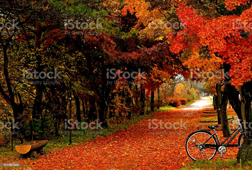 Fall Autumn leaves on trees in Japan stock photo