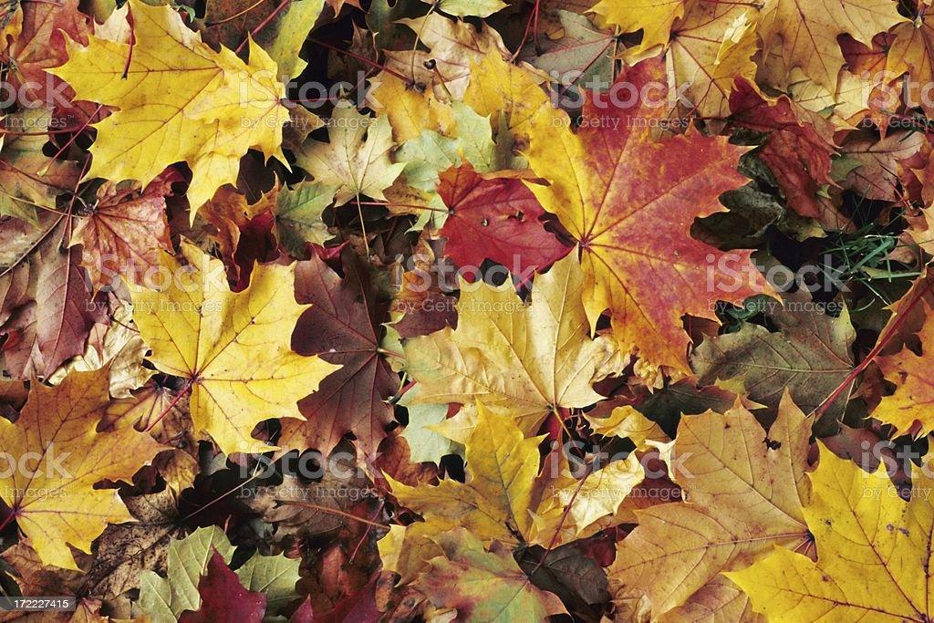 fall background XXLarge stock photo
