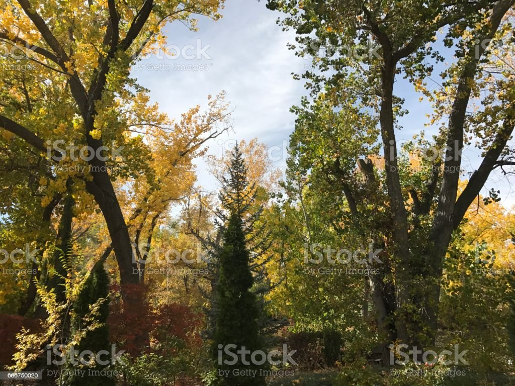 Fall Beauty stock photo