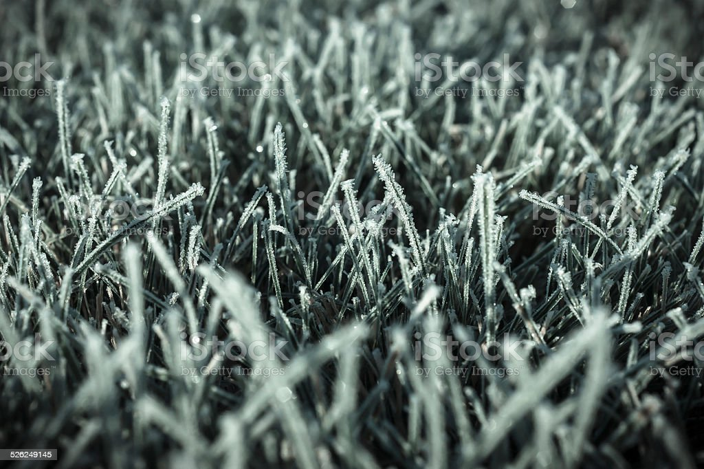 Fall - below zero, first frost on the lawn stock photo