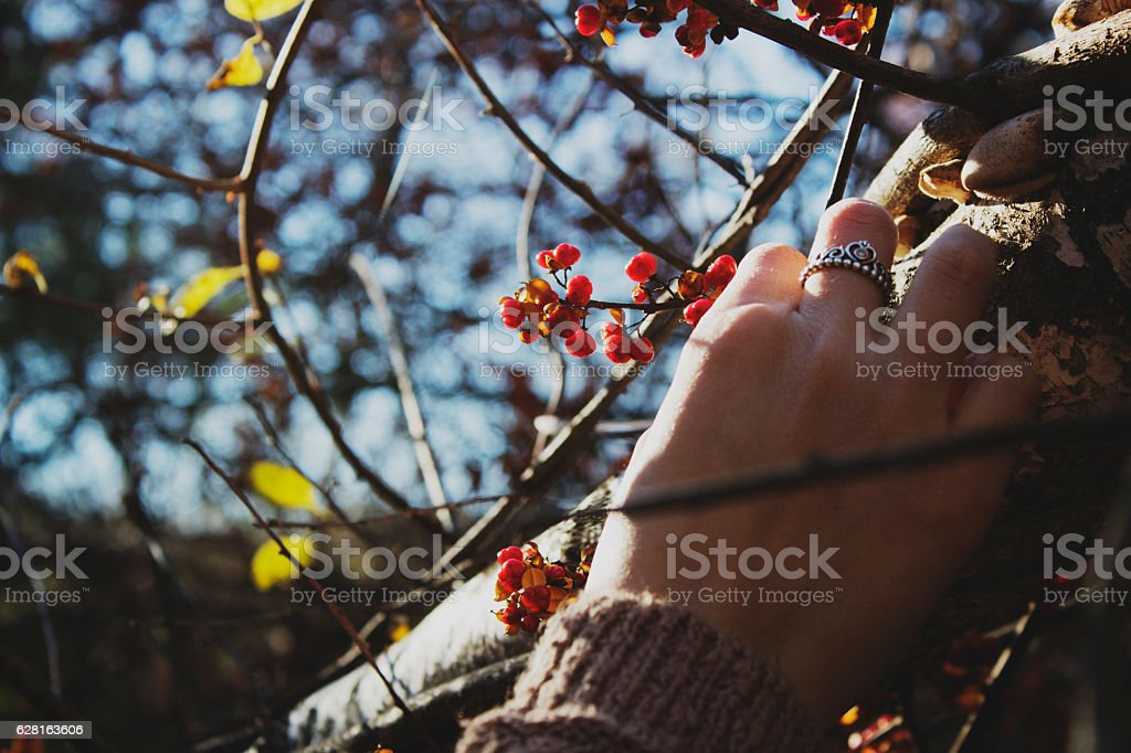 Fall Berry stock photo