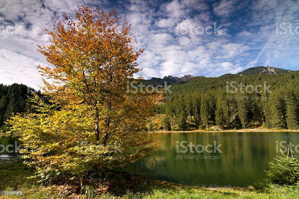 fall broadleaf royalty-free stock photo