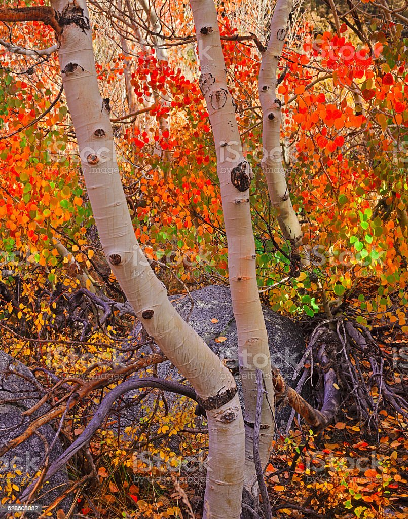 Fall Canopy Colors stock photo