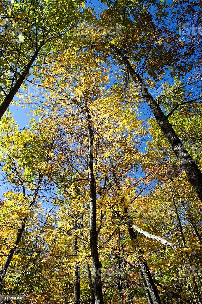 Fall Canopy stock photo