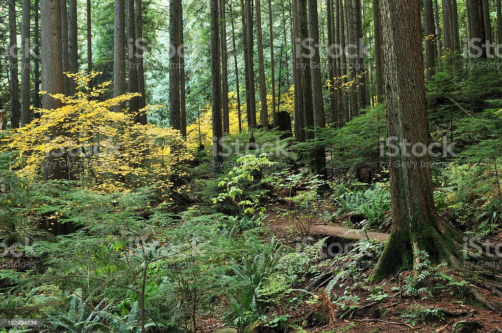 fall color at baden powell trail, north vancouver stock photo
