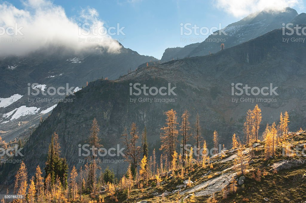 Fall Color Larches in the North Cascades royalty-free stock photo