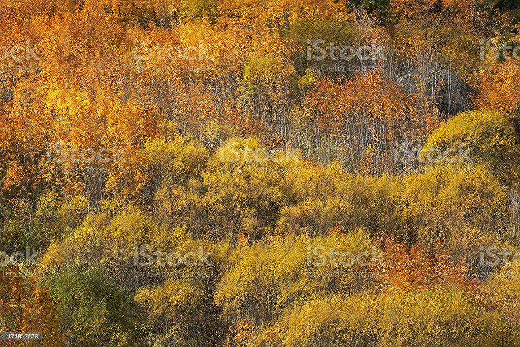 Fall Color of Tumwater Canyon royalty-free stock photo