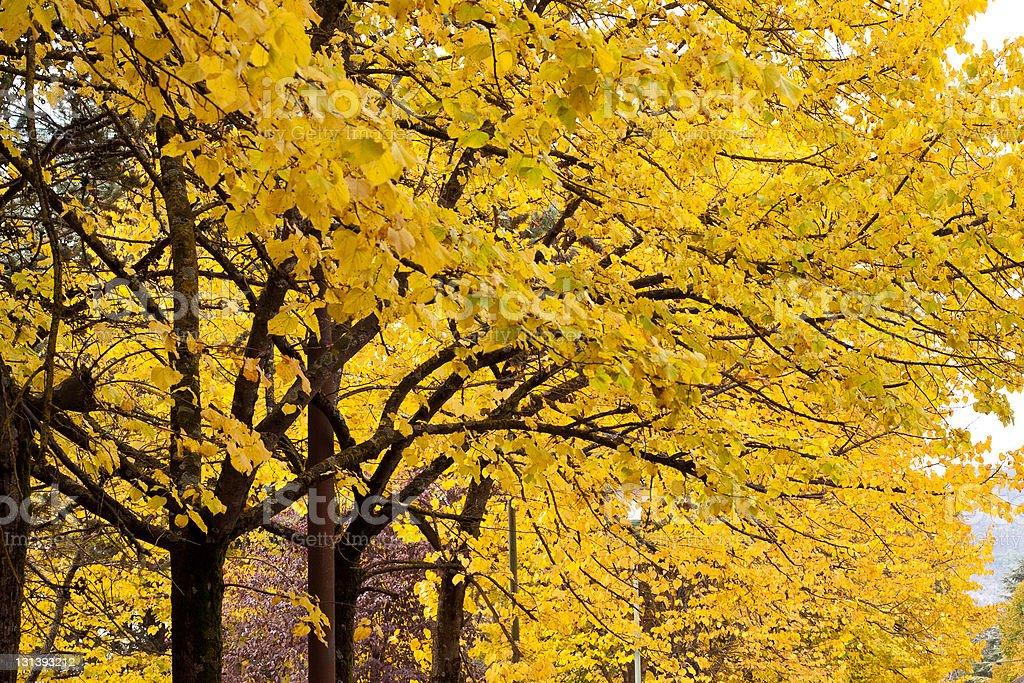 Осенняя цвет Стоковые фото Стоковая фотография
