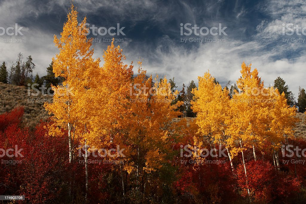 Fall color royalty-free stock photo