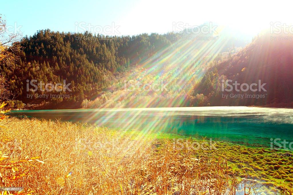 Fall Color stock photo