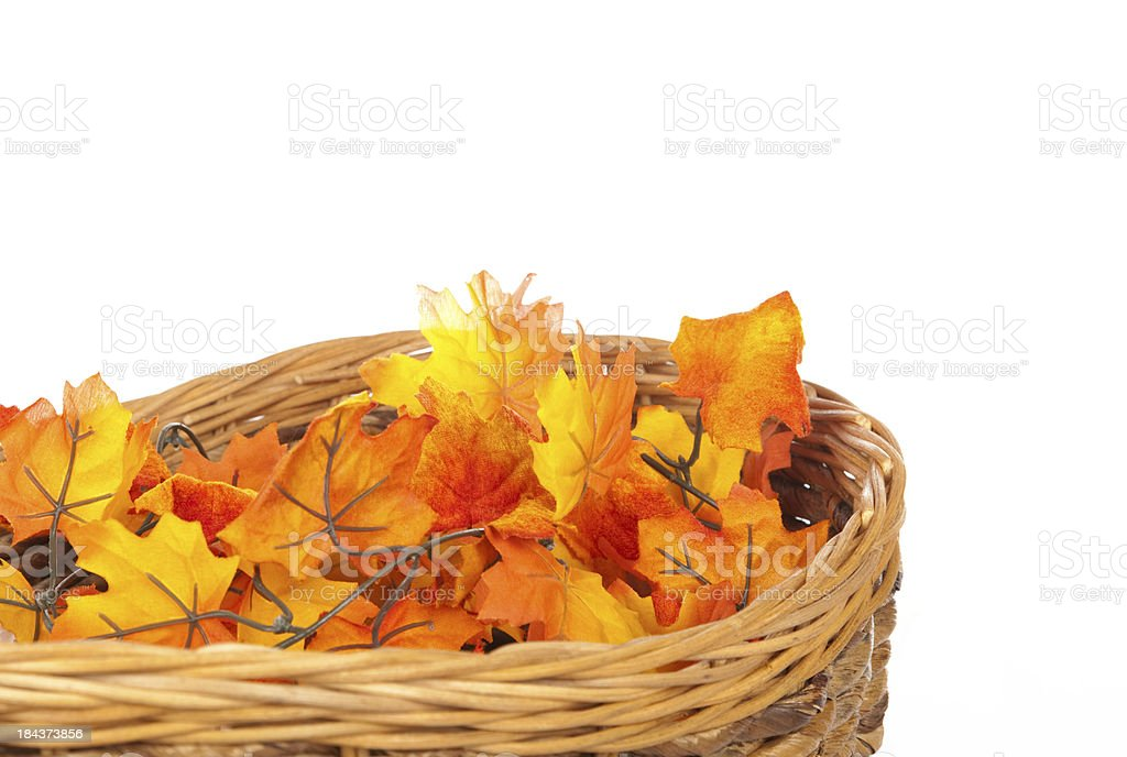 Fall colorful leaves stock photo