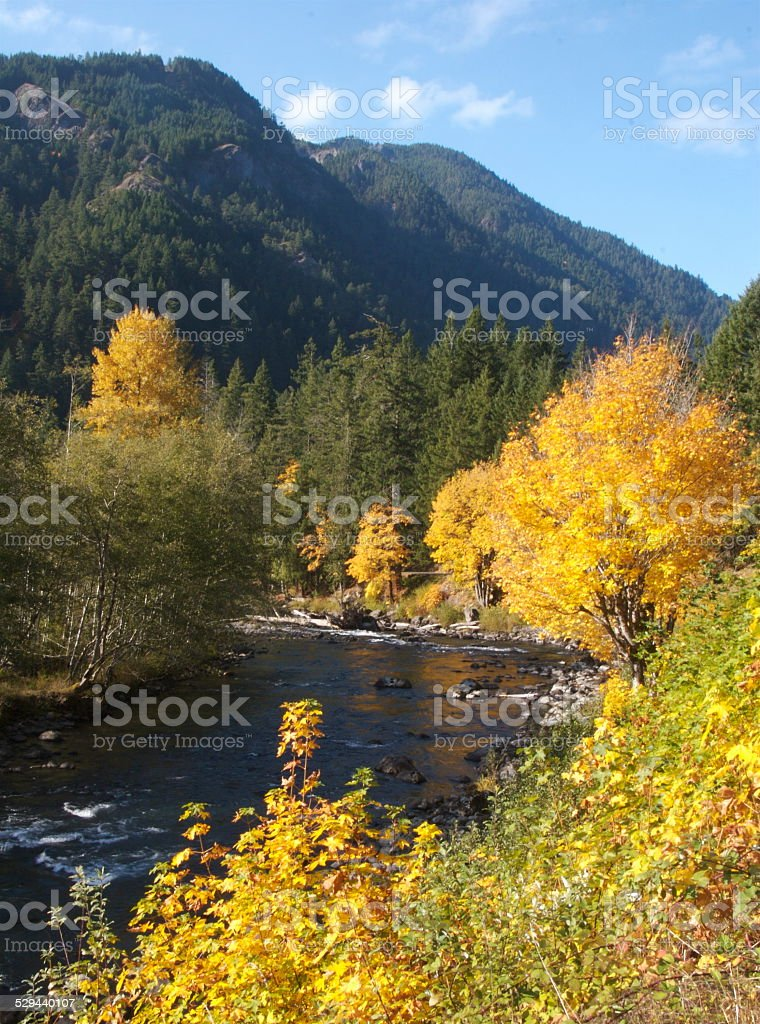 Fall Colors Along The Elwha River stock photo