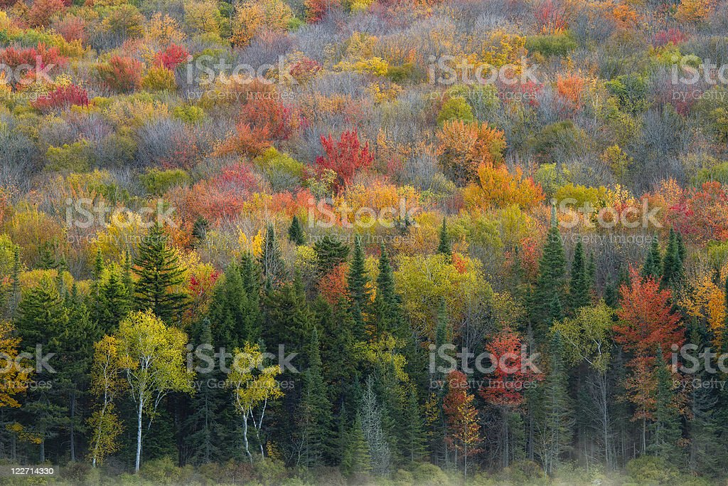 Fall Colors and Mist stock photo