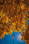 Fall colors and RWB