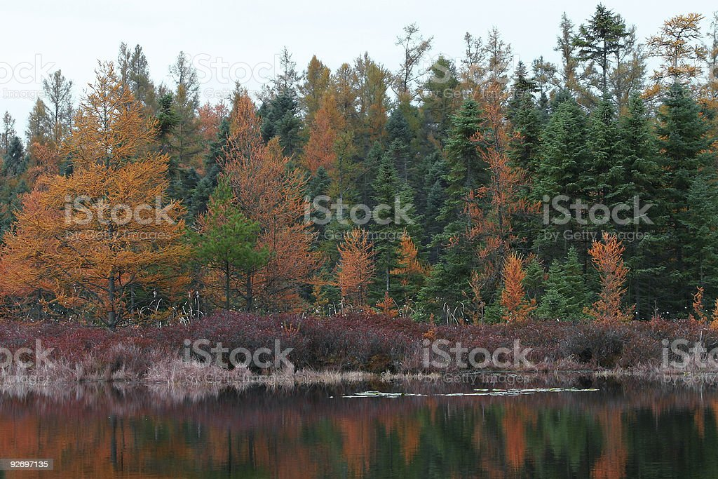 Fall colors at a pond stock photo