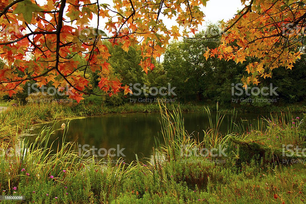 Fall Colors at the pond stock photo